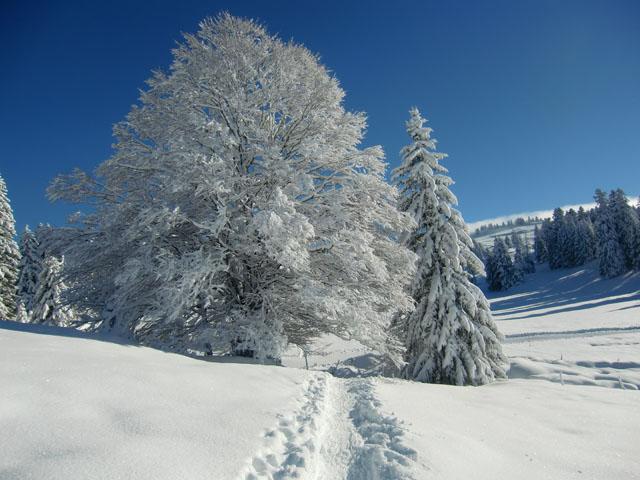 beauté de neige du Jura