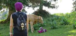 la vache 006