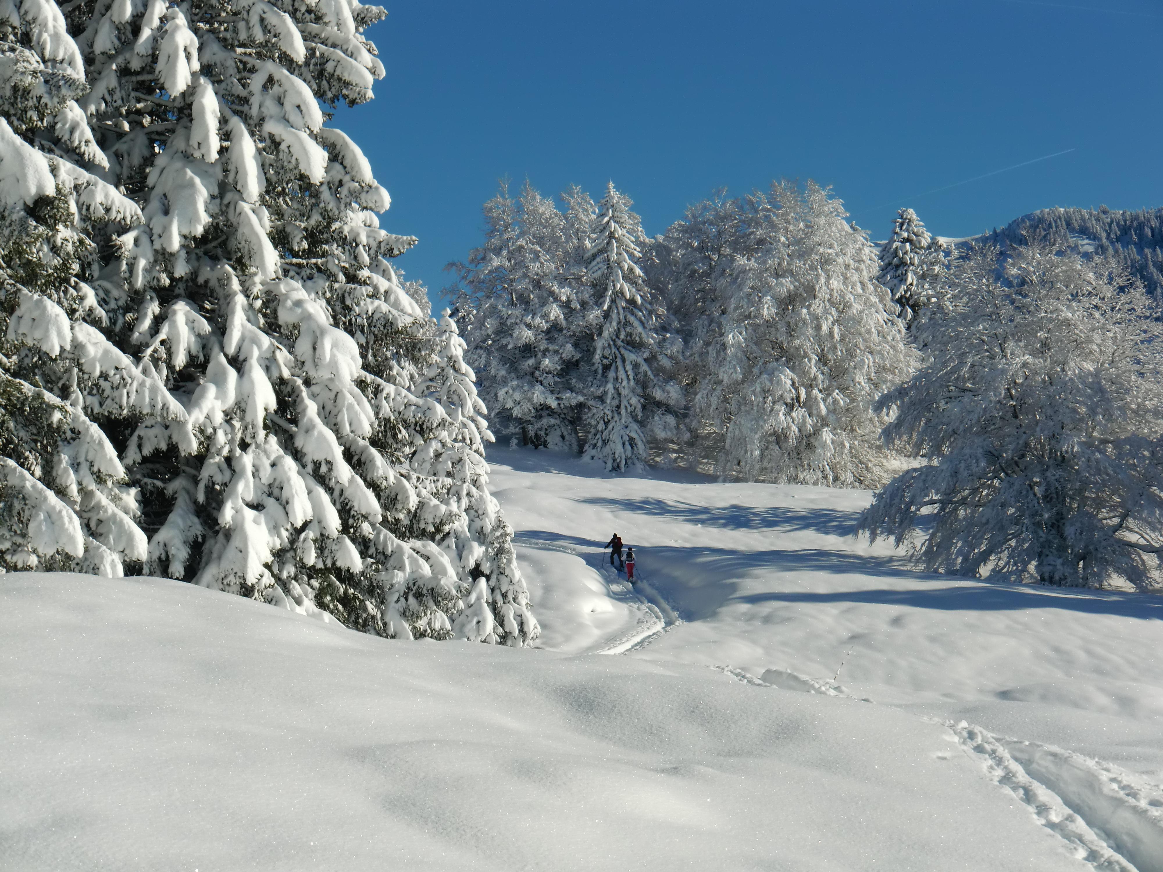 Neige profonde vers la Dole Jura