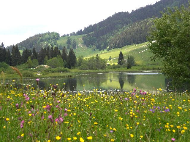 Le Jura en saison verte