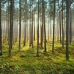 The_Piney_Woods_Ultra.jpg