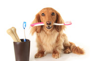 Pet dental health: How to care for your dog's teeth