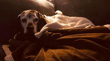 Dog Dementia