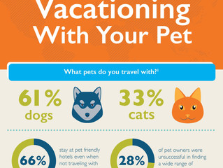 Tips for vacationing with your pets with your pets