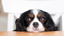 7 Foods That You Should Never Feed Your Dog … Ever