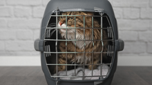 How to choose the best cat carrier in 2019