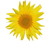 SunflowerHillMarketLogo1.png