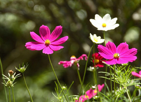 Conheça 10 flores que florescem na primavera