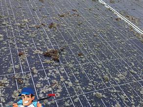 Remoção de líquen de limpeza de painel solar agrícola