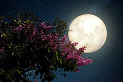 pink-moon-AdobeStock_107312843-600x400-1