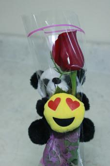 Bear Hug Rose