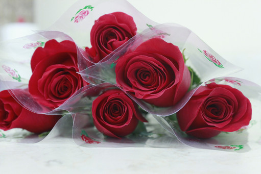 Single Red Rose (2)