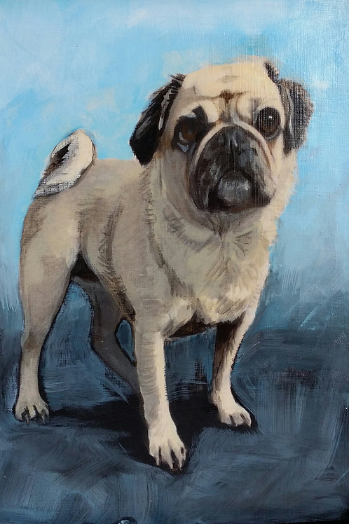 Buster the Pug