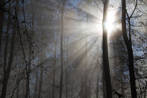 Wald 5.jpg