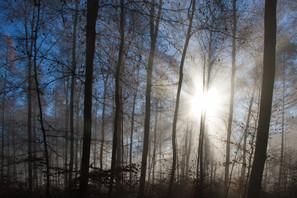 Wald 4.jpg