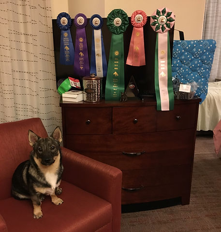 national specialty ribbons griffin.JPG