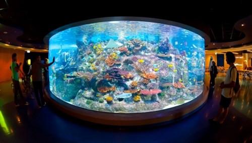 coral-atoll (1).jpg