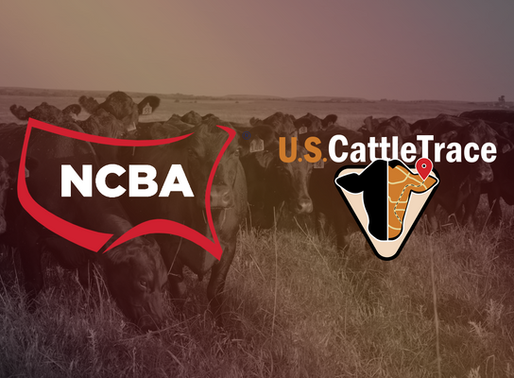 National Cattlemen's Beef Association adopts policy to support U.S. CattleTrace