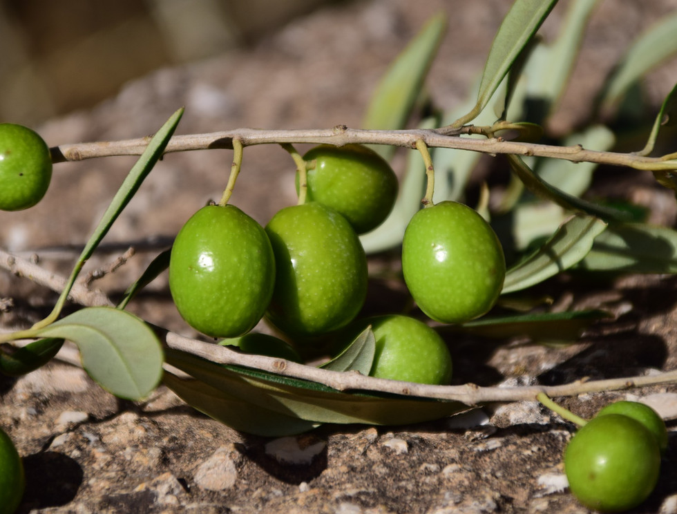olives-1757221_1920.jpg