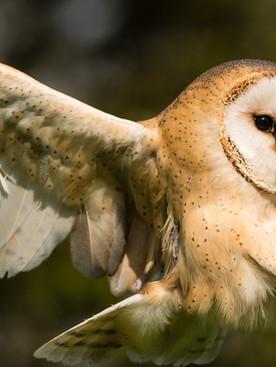 Owl I want for Christmas is 'whooooo'