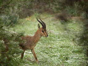 Protecting and preserving nature in the Holy Land