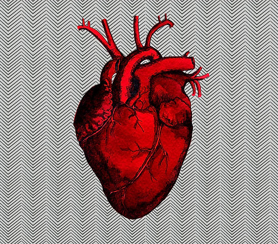 The%20Human%20Heart%20cover%20w%20backgr