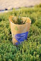 Herbs-4-e1613061506889.jpeg