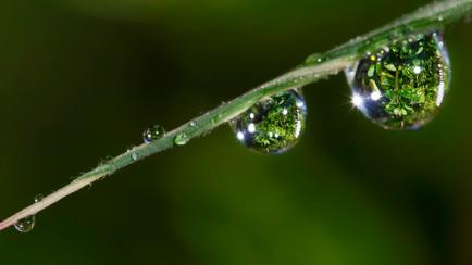 """""""Enjeux climat et biodiversité : aller plus vite ensemble vers une économie post carbone souten"""