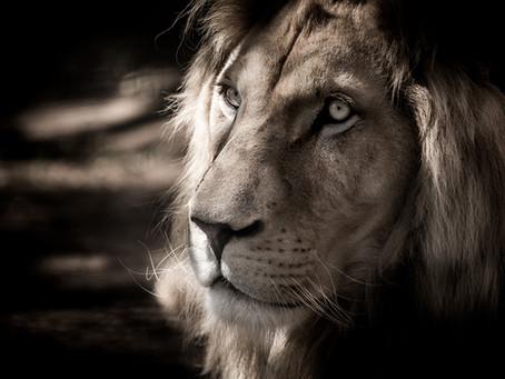 Message des lions, force et équilibre