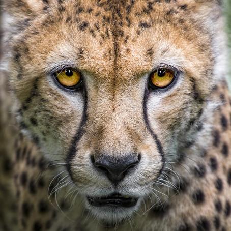 Nouvelle Formation communication animale et rencontre avec les esprits des animaux