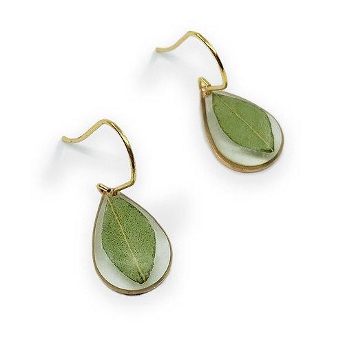 Eucalyptus Earrings ○ Dainty Teardrop