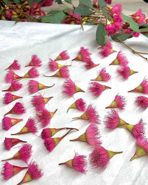 Pink flowering gum pressed flowers