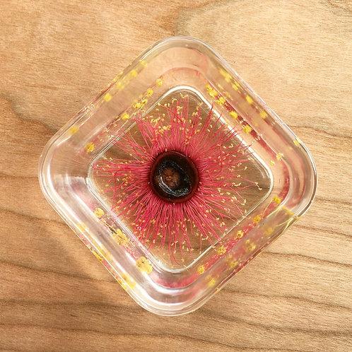 Trinket Bowl Pink Gum Blossom & Wattle ○ Square