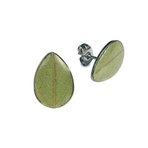 Eucalyptus Studs