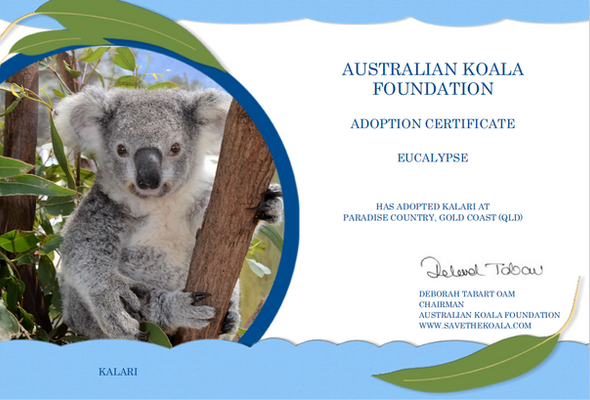 Kalari Koala Adoption