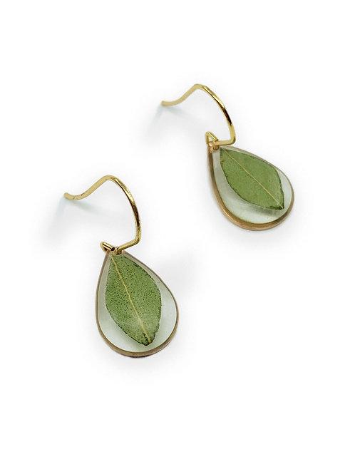 Eucalyptus Teardrop Earrings