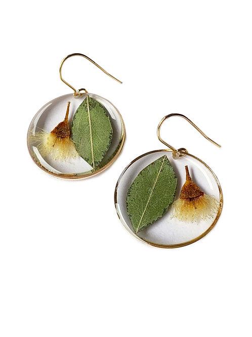 White Flowering Gum Circle Earrings