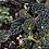 Thumbnail: Dracopelta