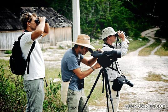 Birdwatchers Muyil