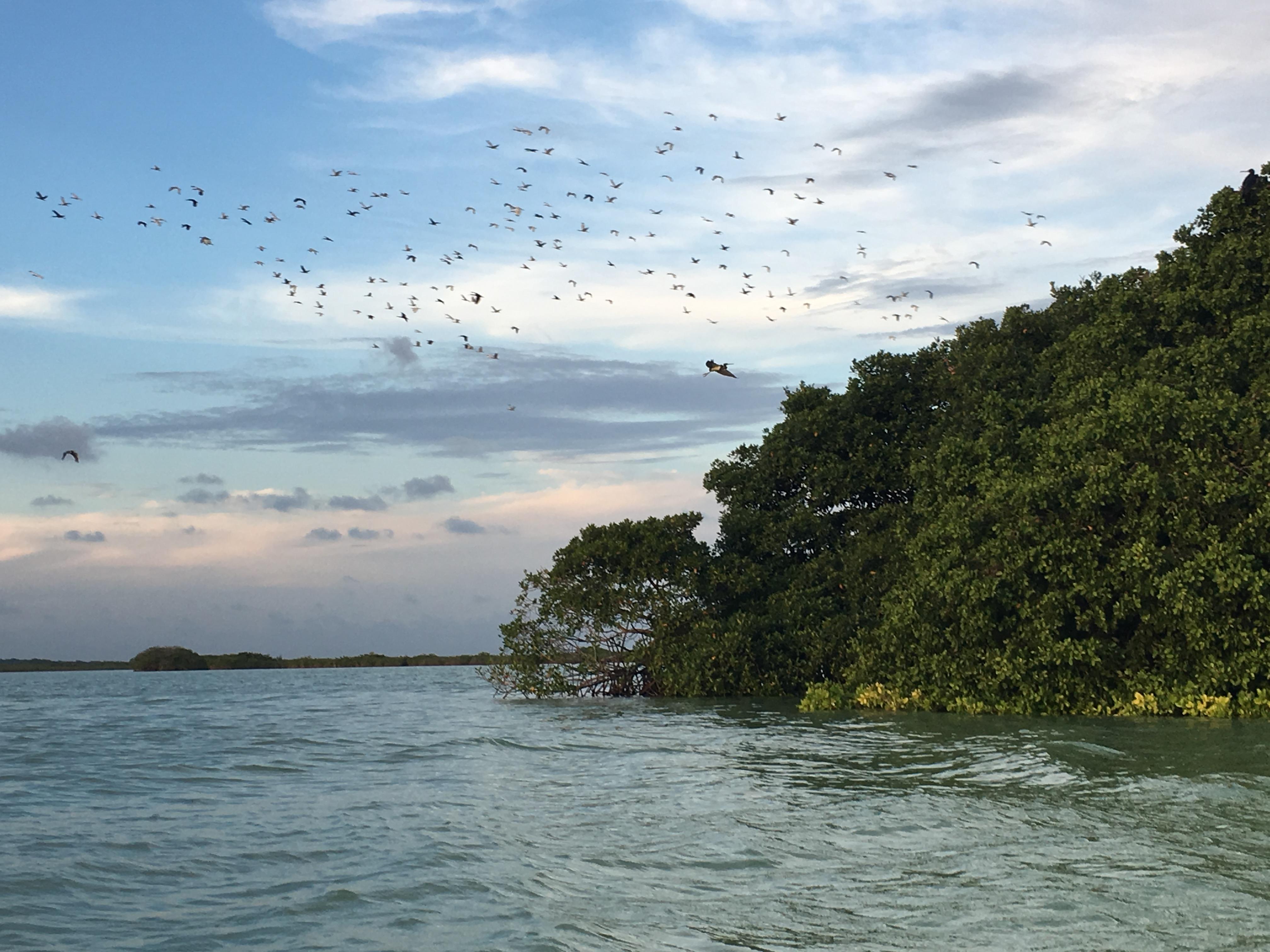Sunset birdwatching Sian Ka´an © Julie Cassard