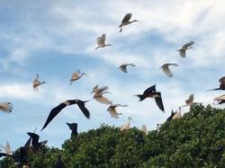 Sian Ka´an Bird island © Julie Cassard