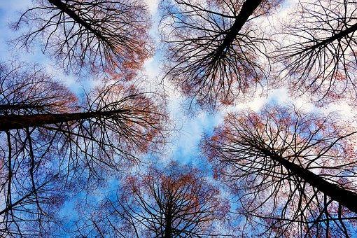 tree-tops-2991743__340.jpg