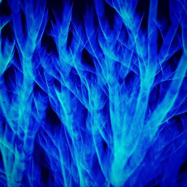 Illuminous light captured with movement. Is it coral or veins or roots or neural pathways..