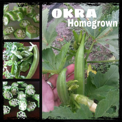 My proud effort in growing this okra at home.  Used it in Dinner tonight.