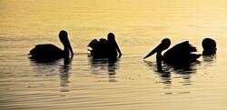 Sunset on Lake Cootharaba