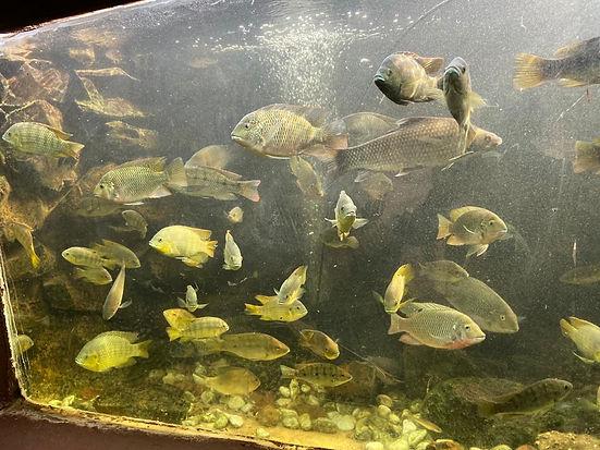fish in  tank.jpeg