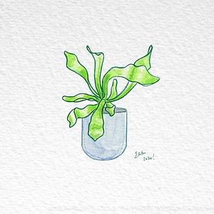 Succulent 29.jpg