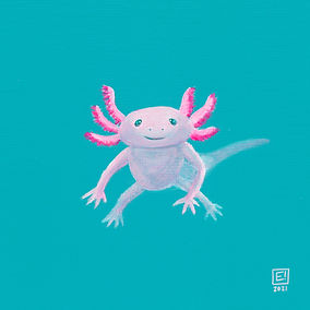 Axolotl square.jpg