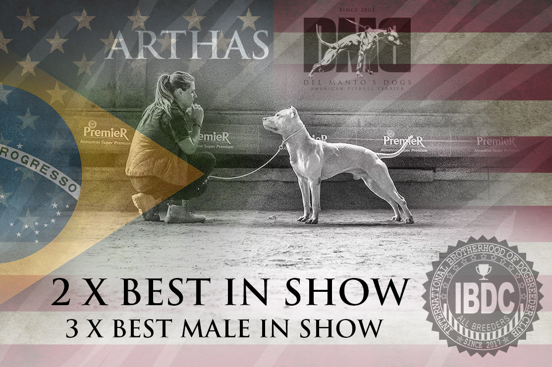 Best In Show Arthas