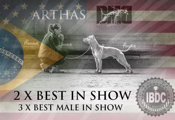 Best In Show Arthas